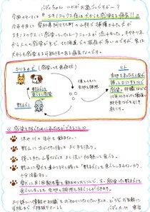 エキノコックス症は犬からも感染する病気!!